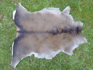 Nice New Real Large Winter Red Deer Skin/Hide/Rug - Taxidermy - A Grade Skin