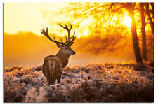 Laminated Golden Stag Sunrise Poster New