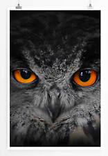 60x90cm Tierfotografie – Uhu mit orangen Augen