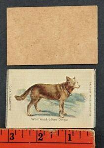 Vintage 1910 Clix Cigarette Silk Wild Australian Dingo Dog with Original Backing