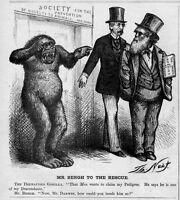CHARLES DARWIN EVOLUTIONARY THEORY GORILLA PREVENTION OF CRUELTY TO ANIMALS