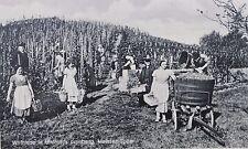 27319 AK C. Umlaufs Weinstube Wein Handlung Meißen Spaar Weinlese Kronberg 1935
