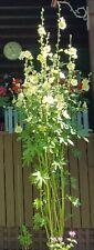 Giant Yellow Single Hollyhock Seeds 11 Feet Tall