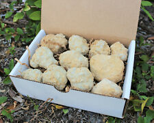 Break Your Own Geodes Gift Box (9 - 12 pcs) Large Unopened Moroccan Crystals