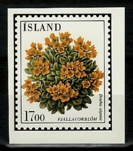 Photo Color Essay, Iceland Sc605 Flower, Draba alpina.
