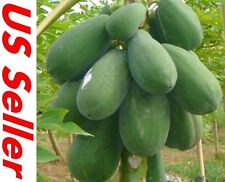 30 Seeds Papaya Seeds E19, TR HOVEY Carica L. Caricaceae, Fruit Tree Seeds