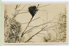 Real Photo POSTCARD RPPC~ PORCUPINE IN THE LAND O LAKES~ A J Kingsbury Antigo WI