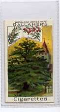 (Ja9619-100)  GALLAHER,WOODLAND TREES,THE YEW TREE,1912#16