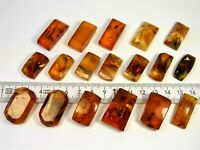 Lot of 18 Pressed Baltic Amber old vintage cabochon stones 44gr. authentic 3235