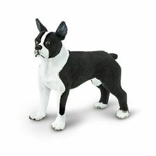SAFARI BEST OF BREED DOGS - BOSTON TERRIER