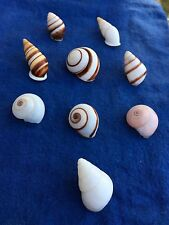 Shells Set Collection of 9 Helicostyla Land Snails Unique to Philippines