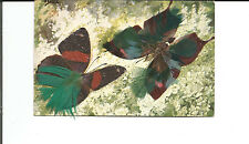 FEATHERED BUTTERFLIES POSTCARD ARTIST F. SAELL