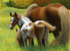 Paint foal mare horse autumn fall sunshine limited edition aceo print art