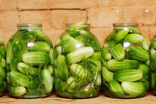35 HOMEMADE PICKLES CUCUMBER 2018 (all non-gmo heirloom vegetable seeds!)