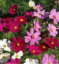 COSMOS FLOWER SEEDS - PINK SENSATION MIX *****