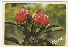 AUSTRALIA- WARATAH- NATIONAL FLOWER OF NEW SOUTH WALES