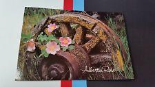Rustic Wheel wagon Alberta Pink Rose Canada Postcard post card