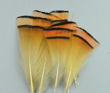 Beautiful 20pcs 4-7 cm Natural pheasant feathers All sorts of adornment
