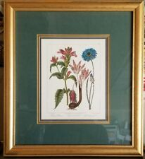"""Syd Edwards 1805 Framed print 18"""" X 20"""" Red flowered chelone Autumed crocus blue"""
