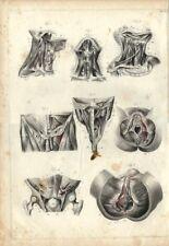 Stampa antica ANATOMIA GOLA OSSA OCCIPITALE RETTO medicina 1850 Antique print