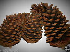 Giant Pine Cones X5 (10-20cm) - Natural, Good for Xmas