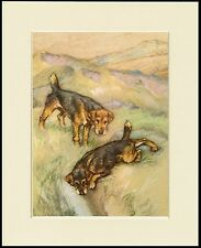 LAKELAND TERRIER TWO DOGS DOG PRINT MOUNTED READY TO FRAME