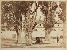 Cipressi della Certosa Roma Rome Italie Vintage Albumine ca 1870