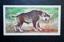 Smilodon    Sabre-toothed Cat      Vintage Colour Card  #  VGC