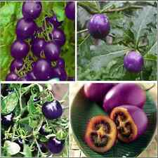50 Seeds Purple Cherry Tomato Organic Garden Heirloom Fruit Vegetable Plant Seed