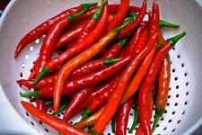 Pepper Seeds, Thick Red Cayenne, Hot, 25 Heirloom, non-gmo Free Shipping