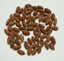 RARE ONE 1 MUKHI RUDRAKSHA JAVA ORIGIN LAB CERTIFIED A+ QUALITY / 55 PIECES