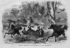TEXAS WILD MUSTANG HORSES HUNTERS CATCHING HORSE HERD BY WATER HOLE ENGRAVING