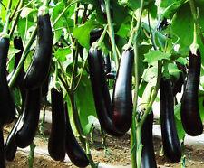 30 Eggplant Seeds Solanum Melongena Aubergine Organic Vegetables