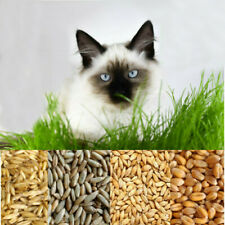 More details for organic cat oat wheat barley rye grass seeds pets herb plant easy grow plant uk