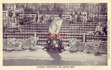 St. Louis Zoo Animal Training lionesses cpyrt 1944 Zoological Board of Control