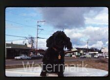 1971 Ektachrome photo slide Closeup of Dog #2