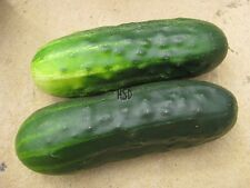SUPER CUCUMBER SEED COMPANIES DONT WANT YOU TO GROW DISEASE RESISTANT 10 SEEDS