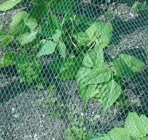Vogelschutznetz Laubschutznetz Gartennetz 4 x 20m