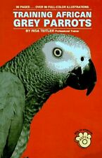 Training African Grey Parrots