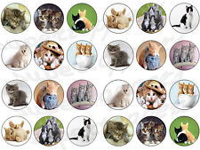 24 kitten cat lovable bun fairy cupcake toppers birthdays party edible paper
