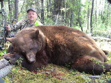 FULLY GUIDED BEAR HUNT