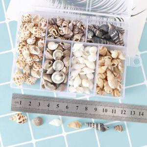 About 100Pcs/Box Natural Conch Shells Aquarium Landscape Seashells Crafts De rE