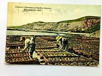 Vintage Postcard 1913 Abalone Fisherman at Harbor District Los Angeles CA