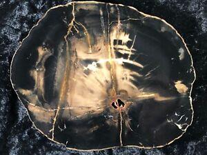 "Polished Petrified Wood Woodworthia Southern Utah Triassic 6.25""x5"""