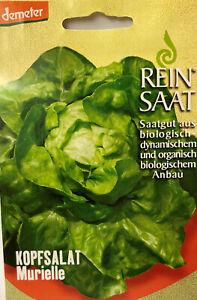 Kopfsalat Murielle - Saatgut - Samen Demeter aus biologischem Anbau Salatsamen