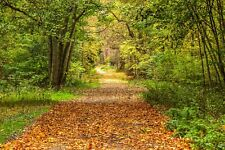 WOODLAND FOREST PATH CANVAS PICTURE POSTER PRINT WALL ART UNFRAMED 1410
