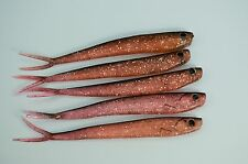 Soft Plastic Fishing Lures QUANTUM SPECIALIST 11cm Bait Tackle BREAM SNAPPER JEW