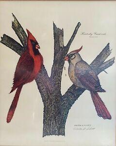 Kentucky Cardinals by Walter A. Schott - Limited Edition