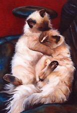 BIG 13x19 RAGDOLL CAT Art PRINT of Painting by VERN