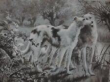 Vintage 1900 Postcard irish wolfhound dogs kiss artist signed Lurcher sheep dog*